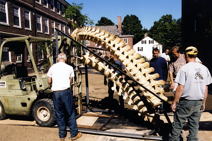Workers prepare to transport the whale's skeleton