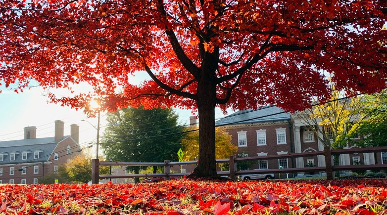Fall foliage on Exeter's campus