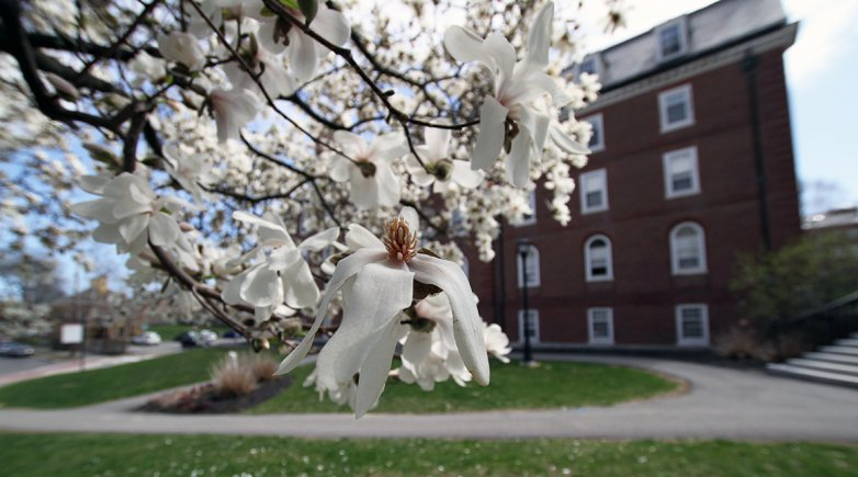 Spring blossoms on Exeter's campus